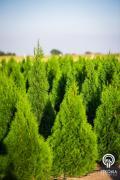 Декоративные растения и травы оптом из Польши