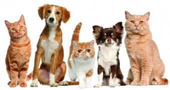 Export abroad Pets