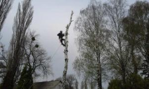 Спиливание деревьев любой сложности, Киев и область